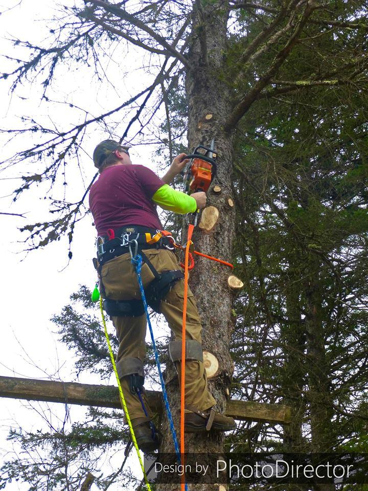 Joe's Tree Service image 7