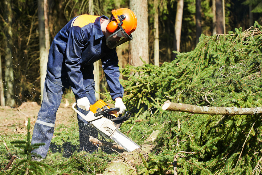 Affordable Tree Service image 6