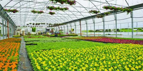 Northgate Greenhouses image 0