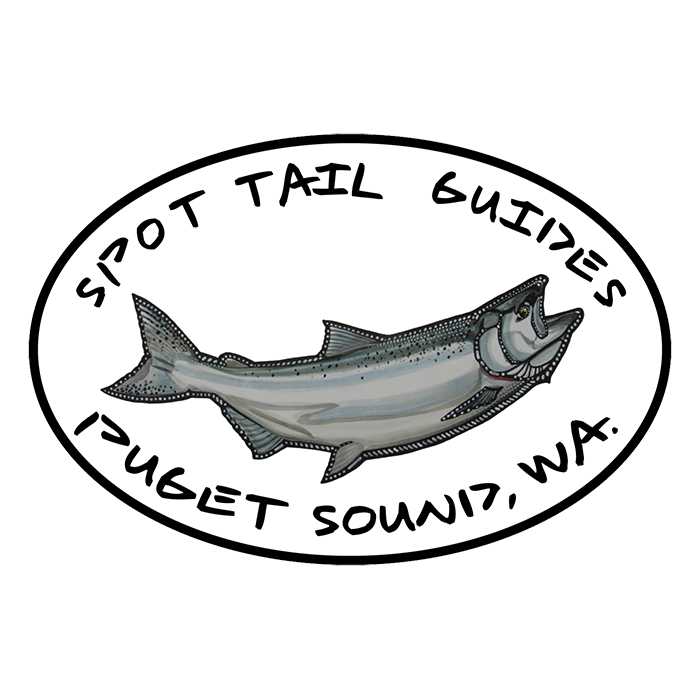 A Spot Tail Salmon Guide