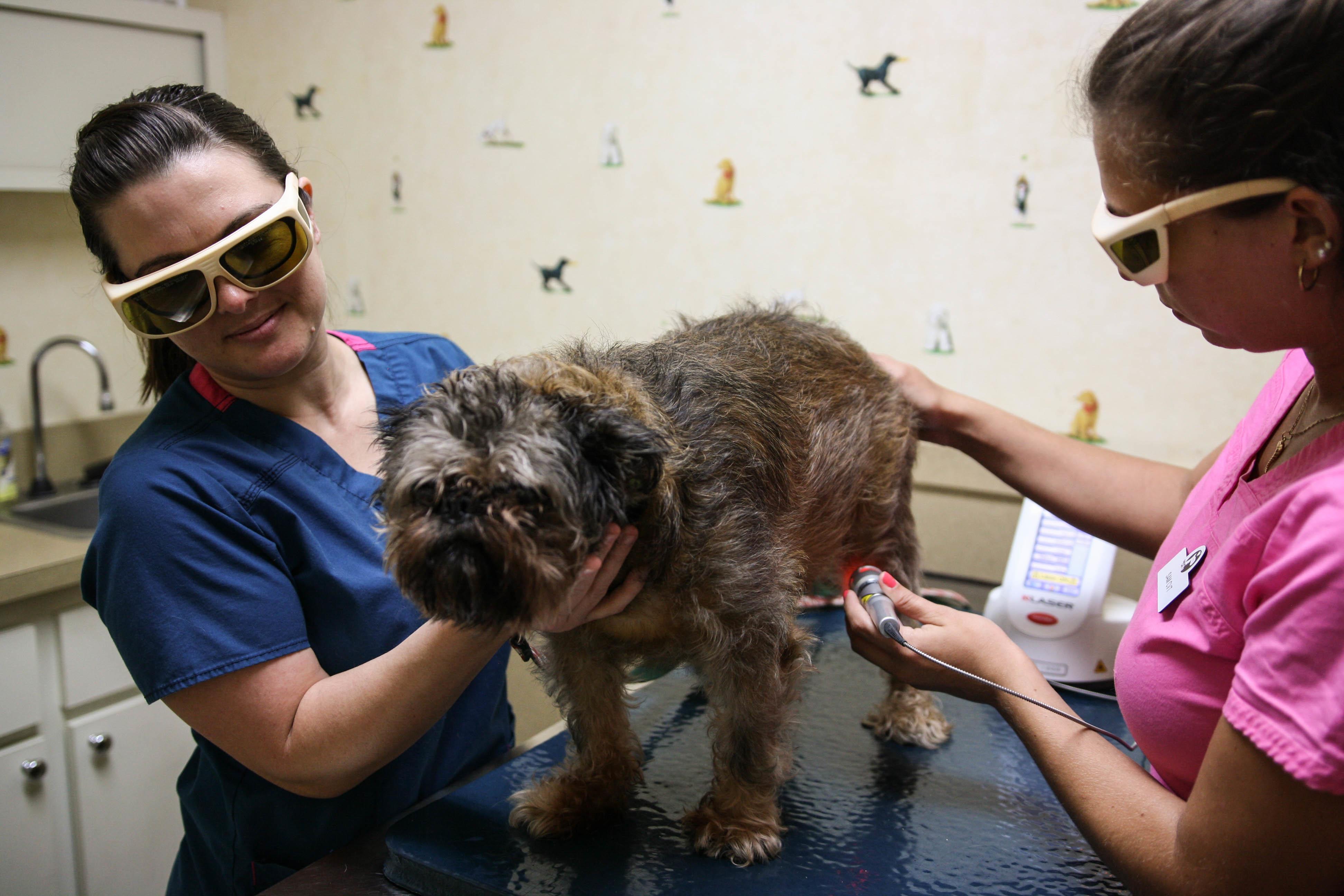 Oakhurst Veterinary Hospital image 4