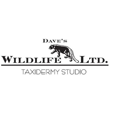 Dave's Wildlife Ltd. Taxidermy image 2