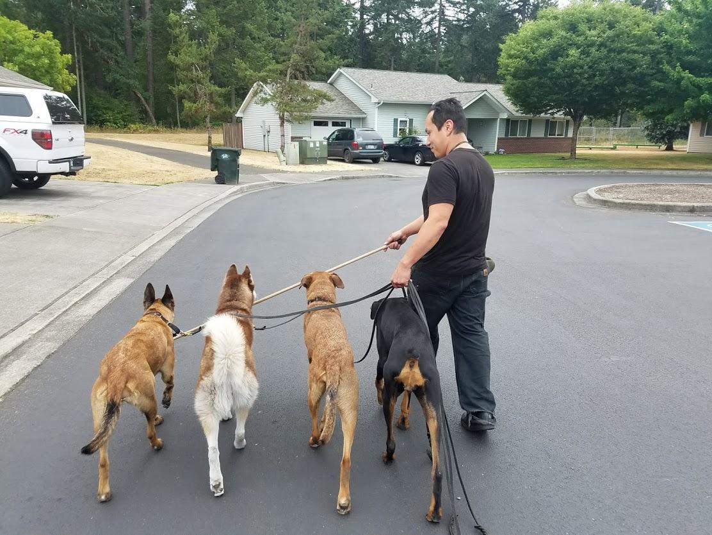 Dog Control(Training) image 0