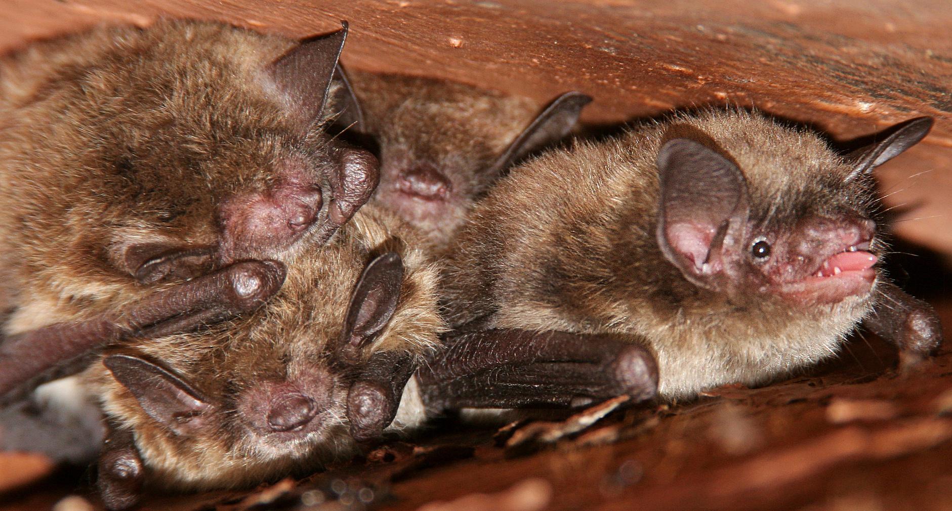 Verminator Pest Control LLC image 14
