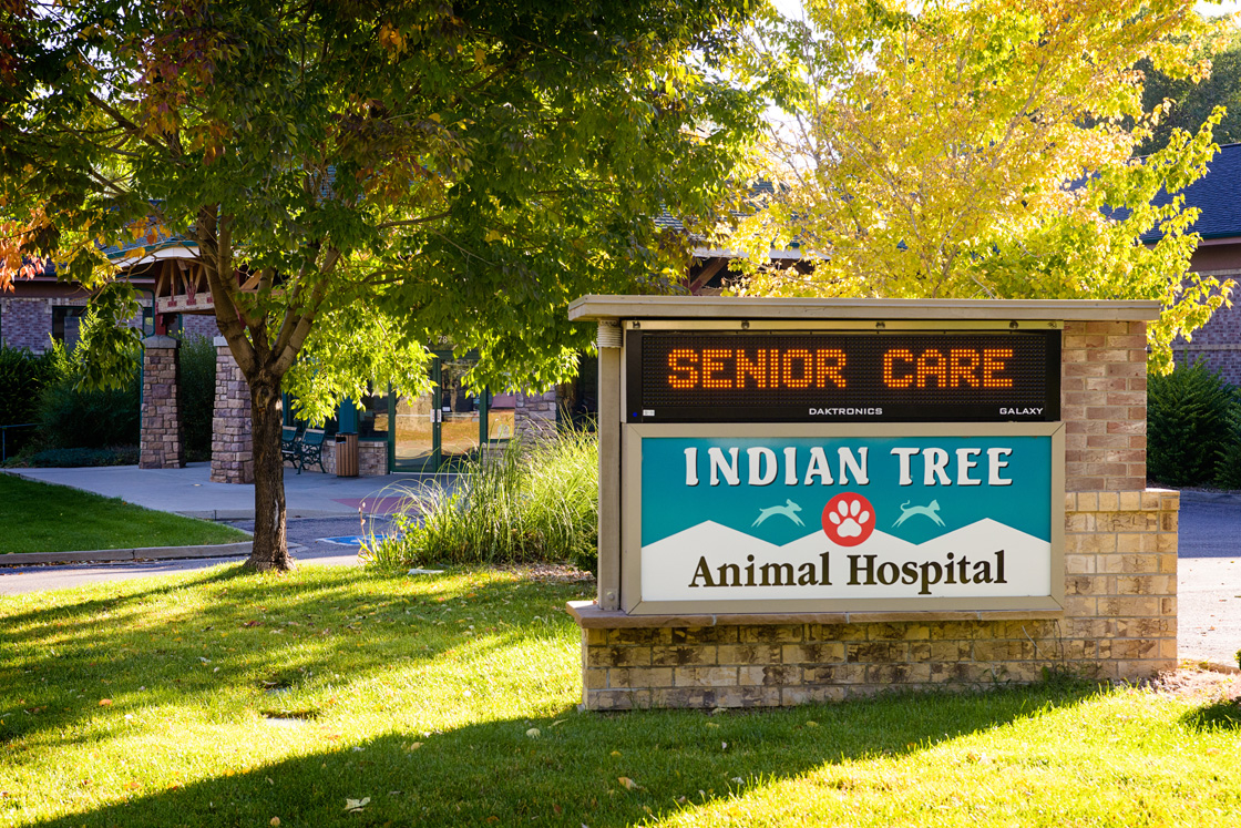 Indian Tree Animal Hospital