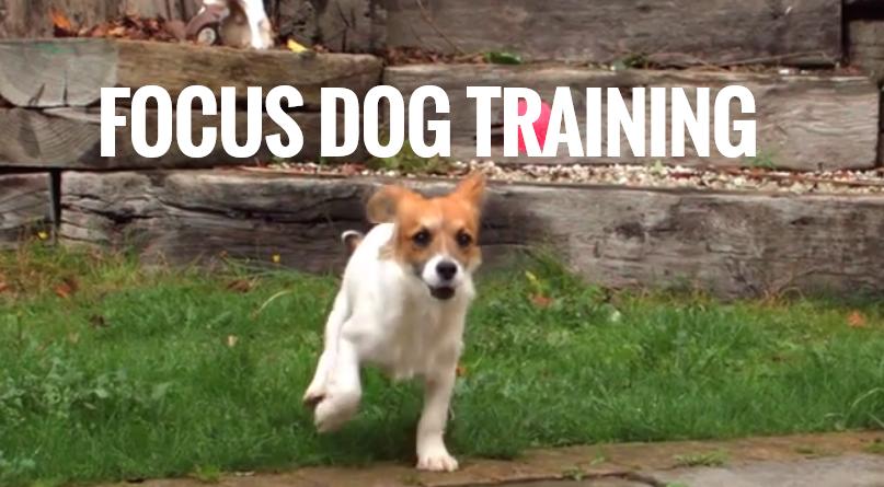 Focus Dog Training - Obedience Dog Training image 0