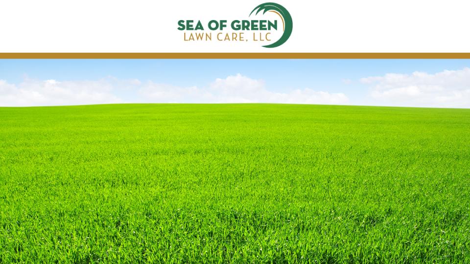 Sea of Green Lawn Care, LLC image 0
