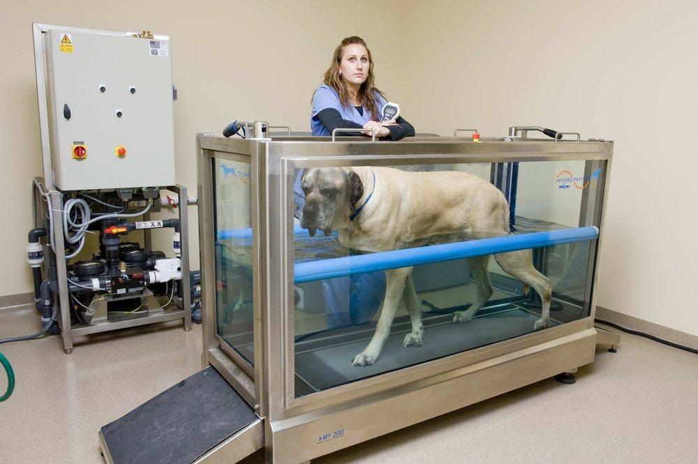 VCA Westlake Village Animal Hospital image 1
