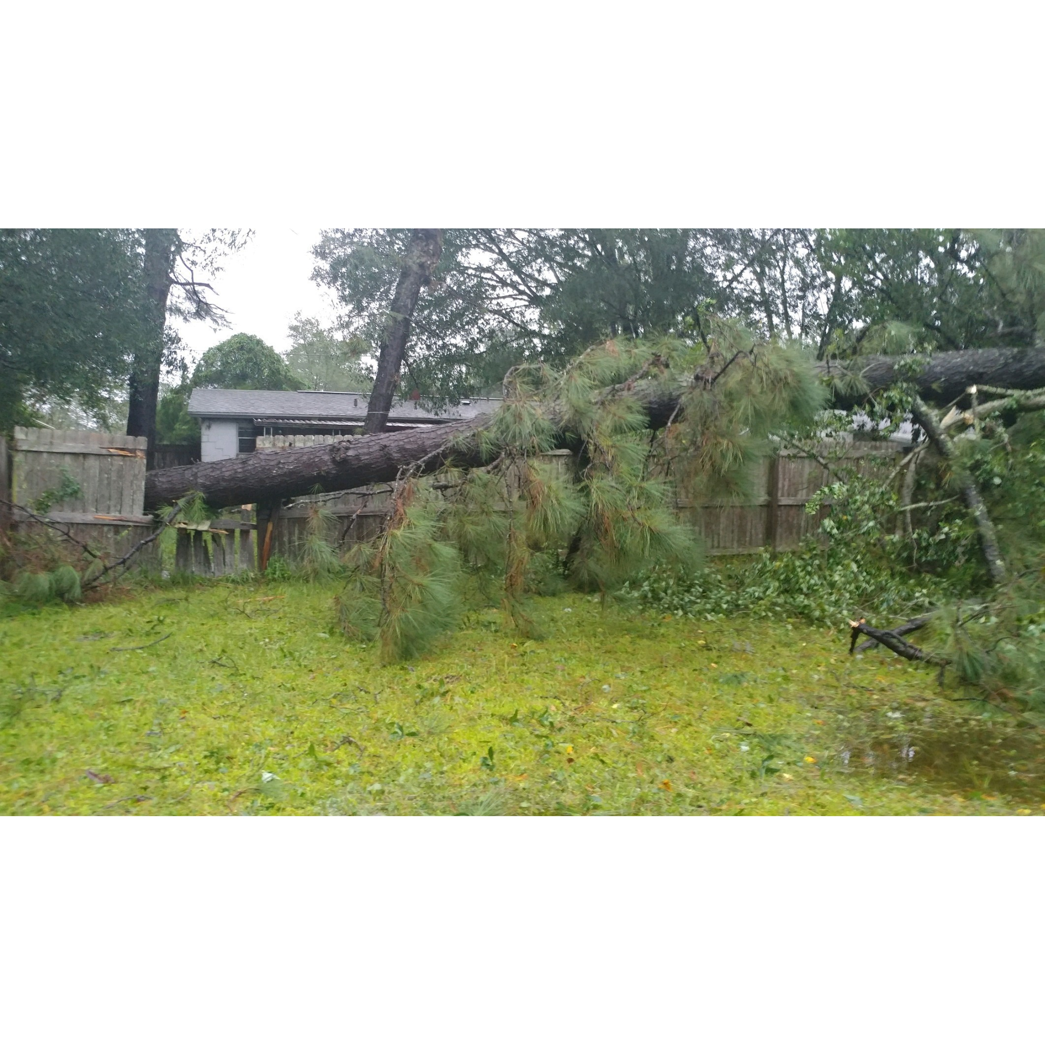 The Lawn Rangers Tree Removal and Lawn Service
