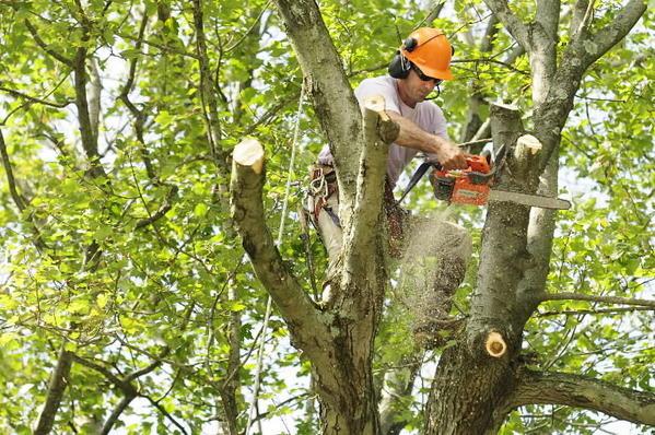Jeff's Tree Service image 4