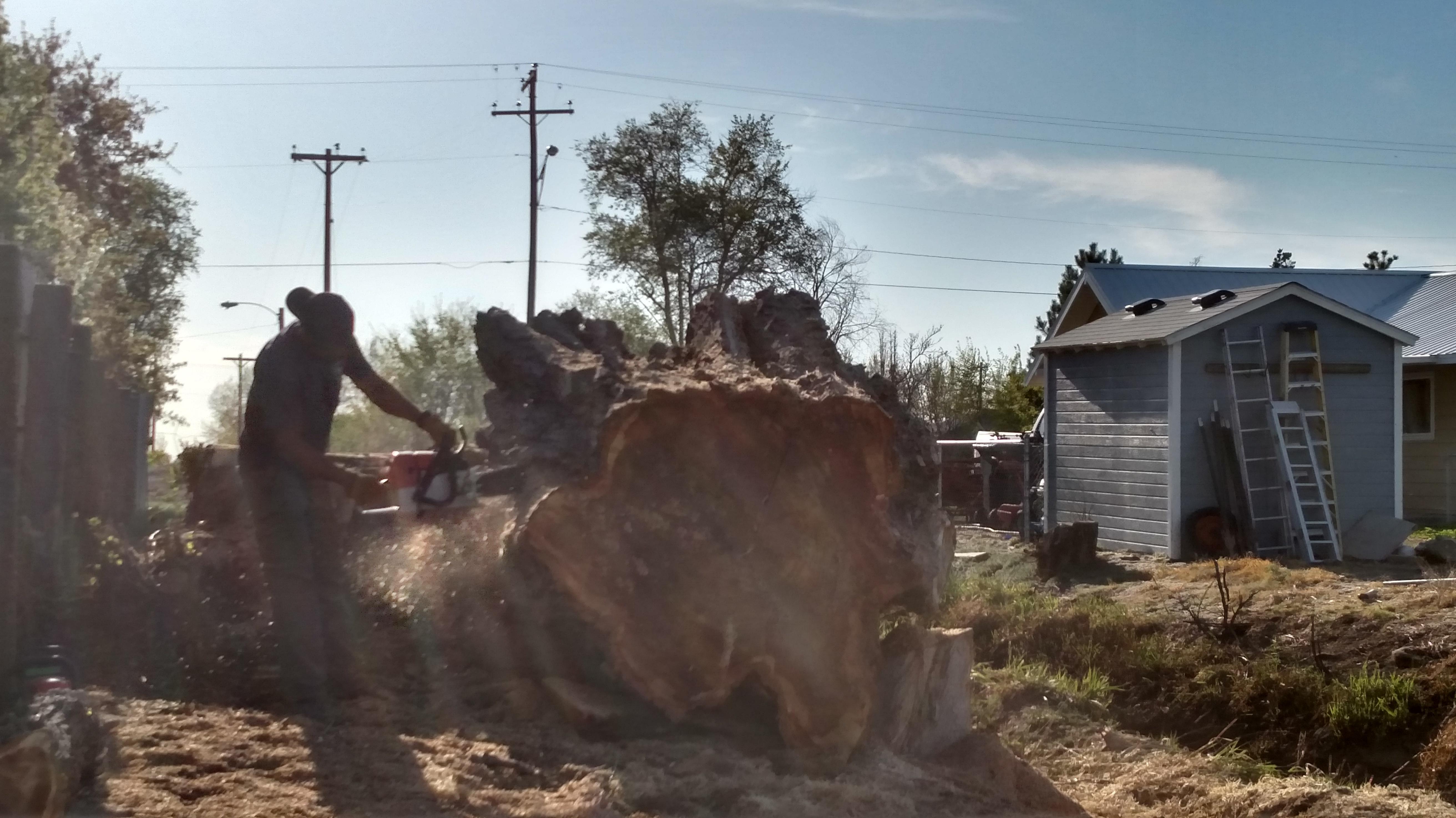 Southern Idaho Tree Specialists image 1