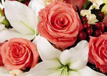Bristol Florist image 0