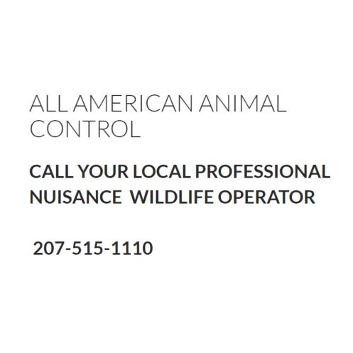 All American Wildlife Control