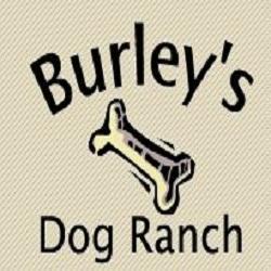 Burley S Dog Ranch Portland