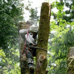 A&A Tree Service image 8