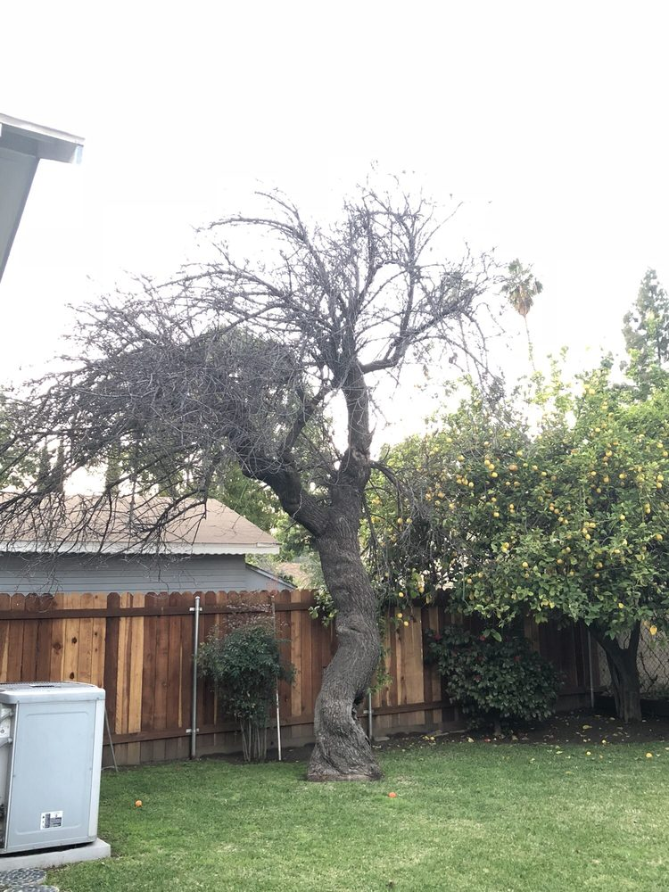 Golden State Tree Service image 6