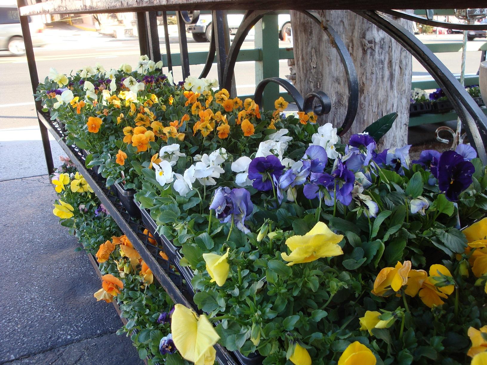 Tony Distefano Landscape Garden Center image 9