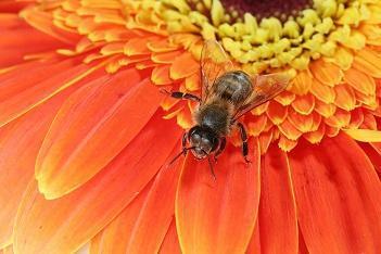 Little Giant Beekeepers image 2