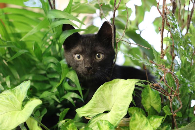 Care Pet Clinic Texarkana