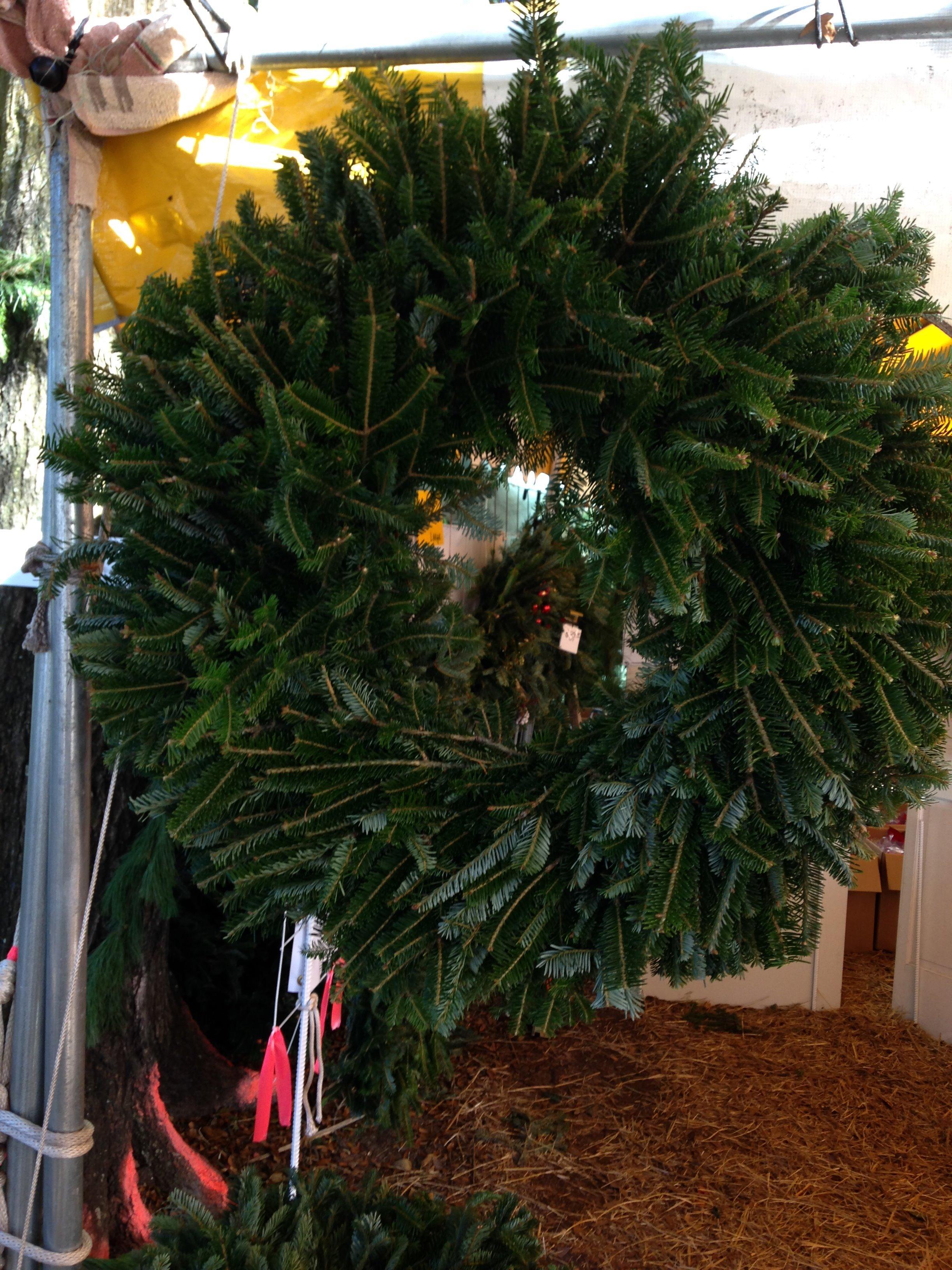 Dave's Christmas Tree Lot image 32