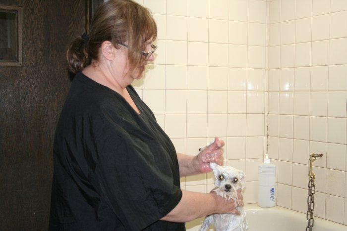VCA Joliet Animal Hospital image 4