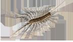 Crown Exterminators image 1
