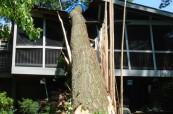 Patrick Musser Tree Service image 0