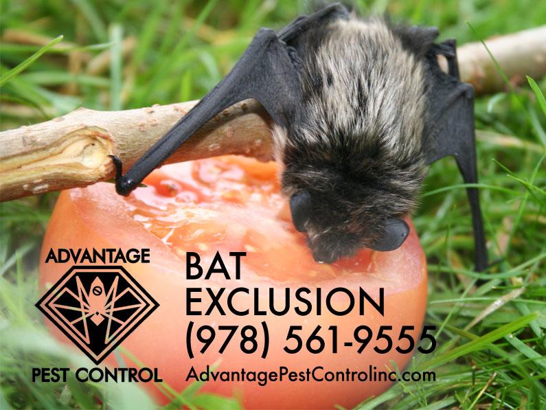 Advantage Pest Control, Inc image 3