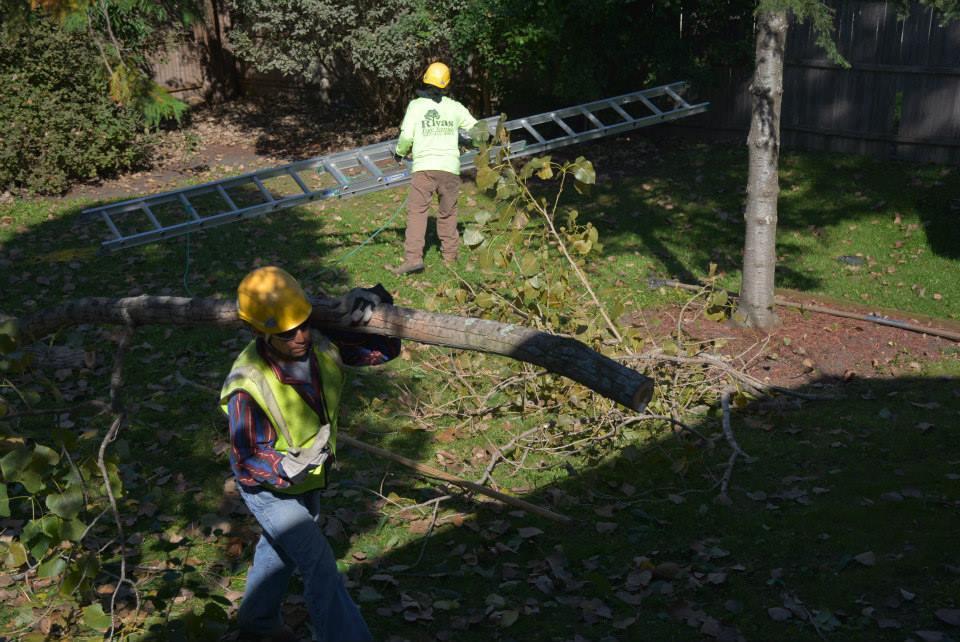 Rivas Tree Service image 10