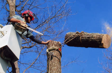 image of Precision Tree Service - Tree Removal Snohomish County