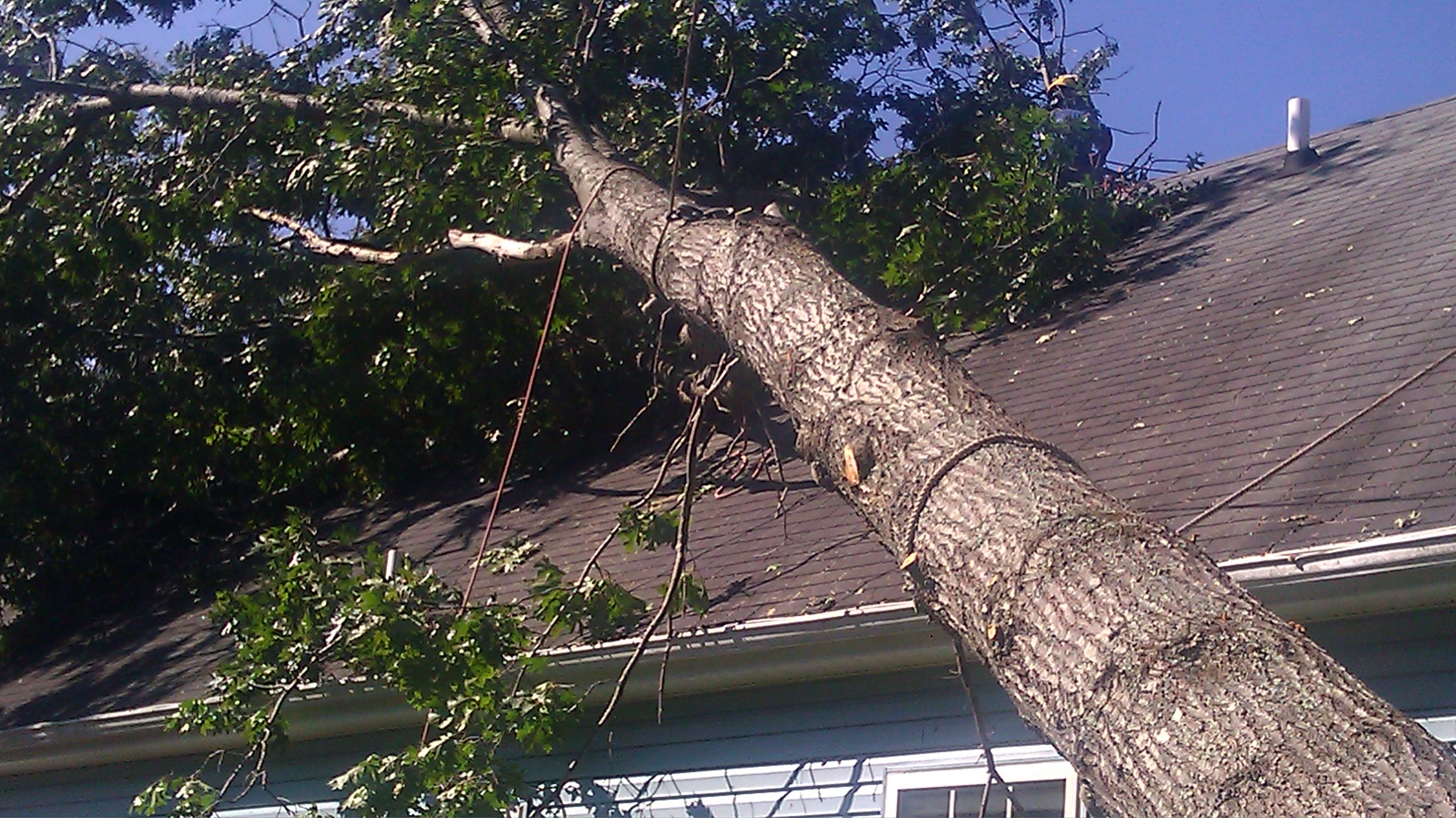 Milton's Tree Care Services image 2