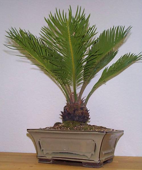 Pacific Palms image 1