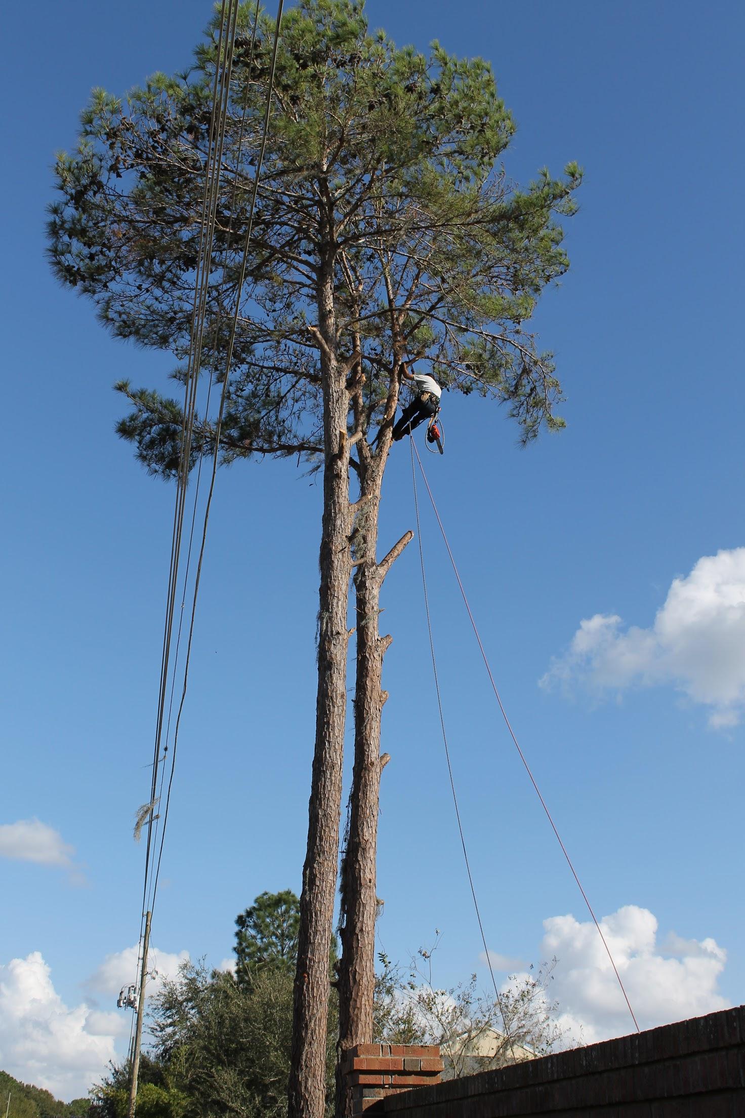 Karney Tree Service image 12