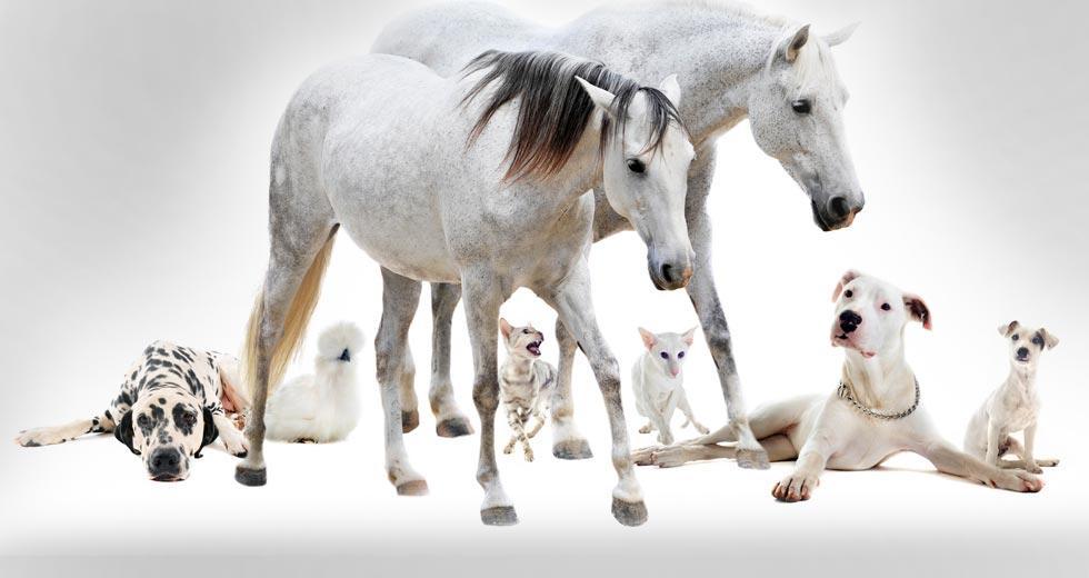 Teeter Veterinary Services image 5