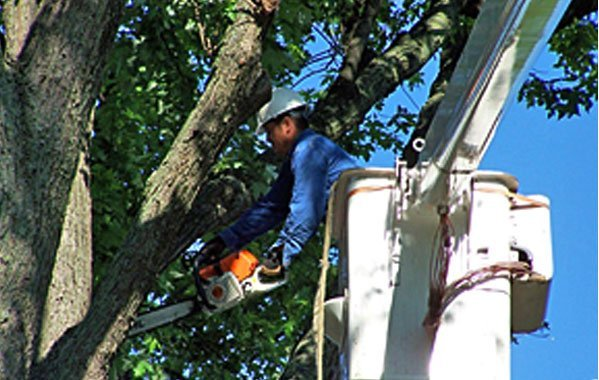 Shock Brothers Tree Care image 0