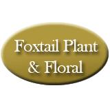 Foxtail Plant & Floral