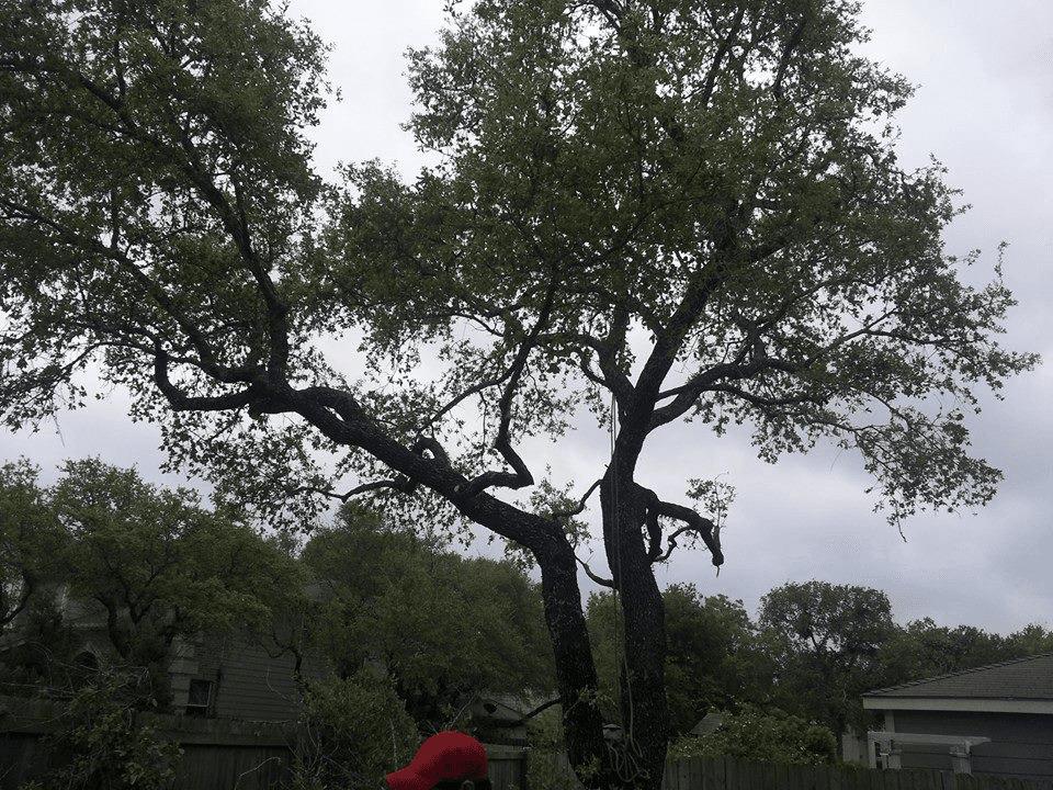 Almanza Tree Trimming Service & More image 6