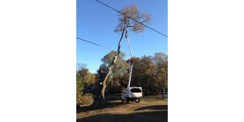 Childers Tree Service image 2