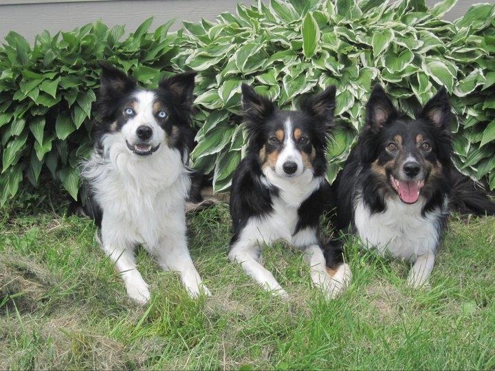 Prodigy Pups Dog Training LLC image 4
