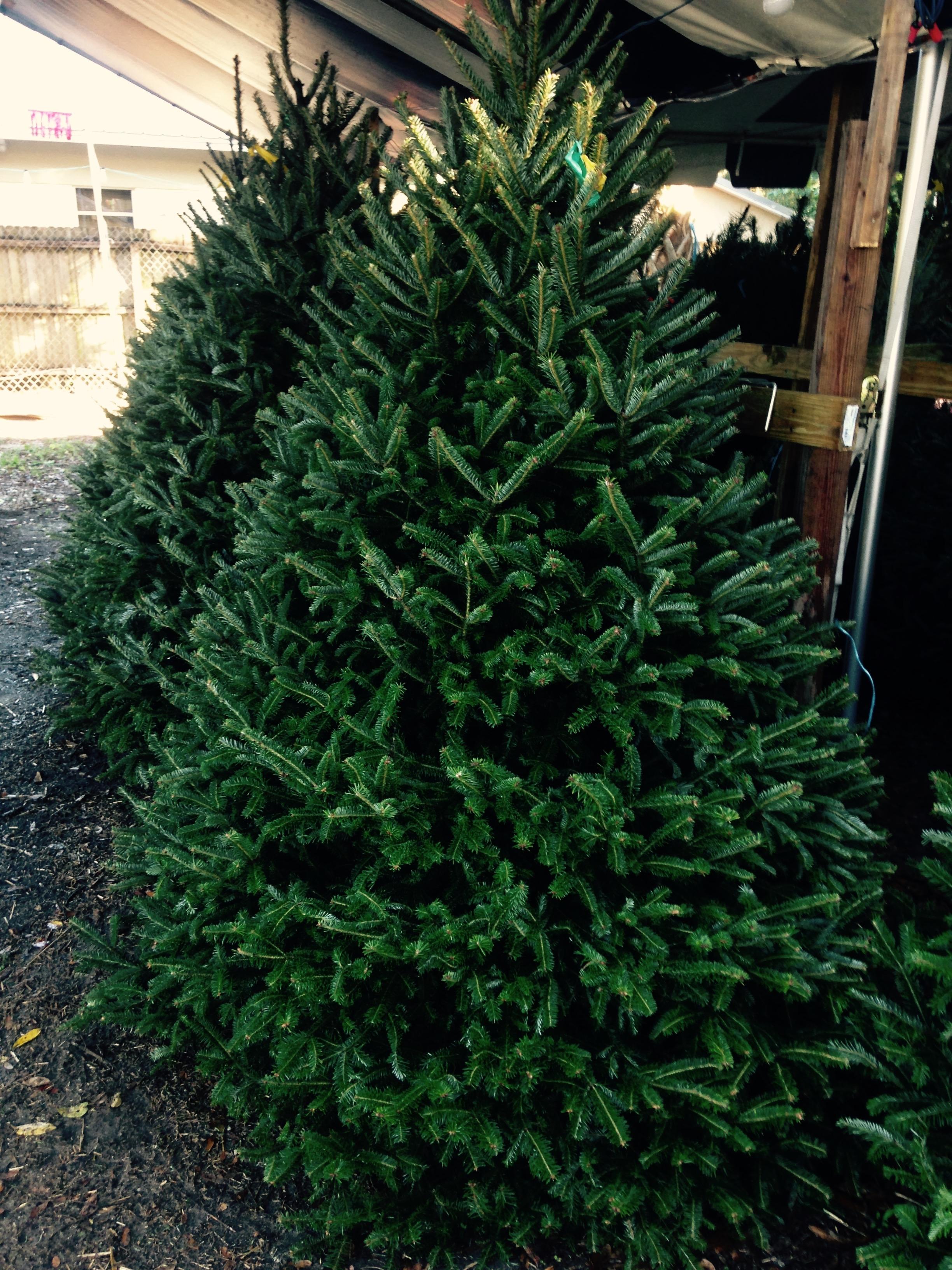 Dave's Christmas Tree Lot image 18