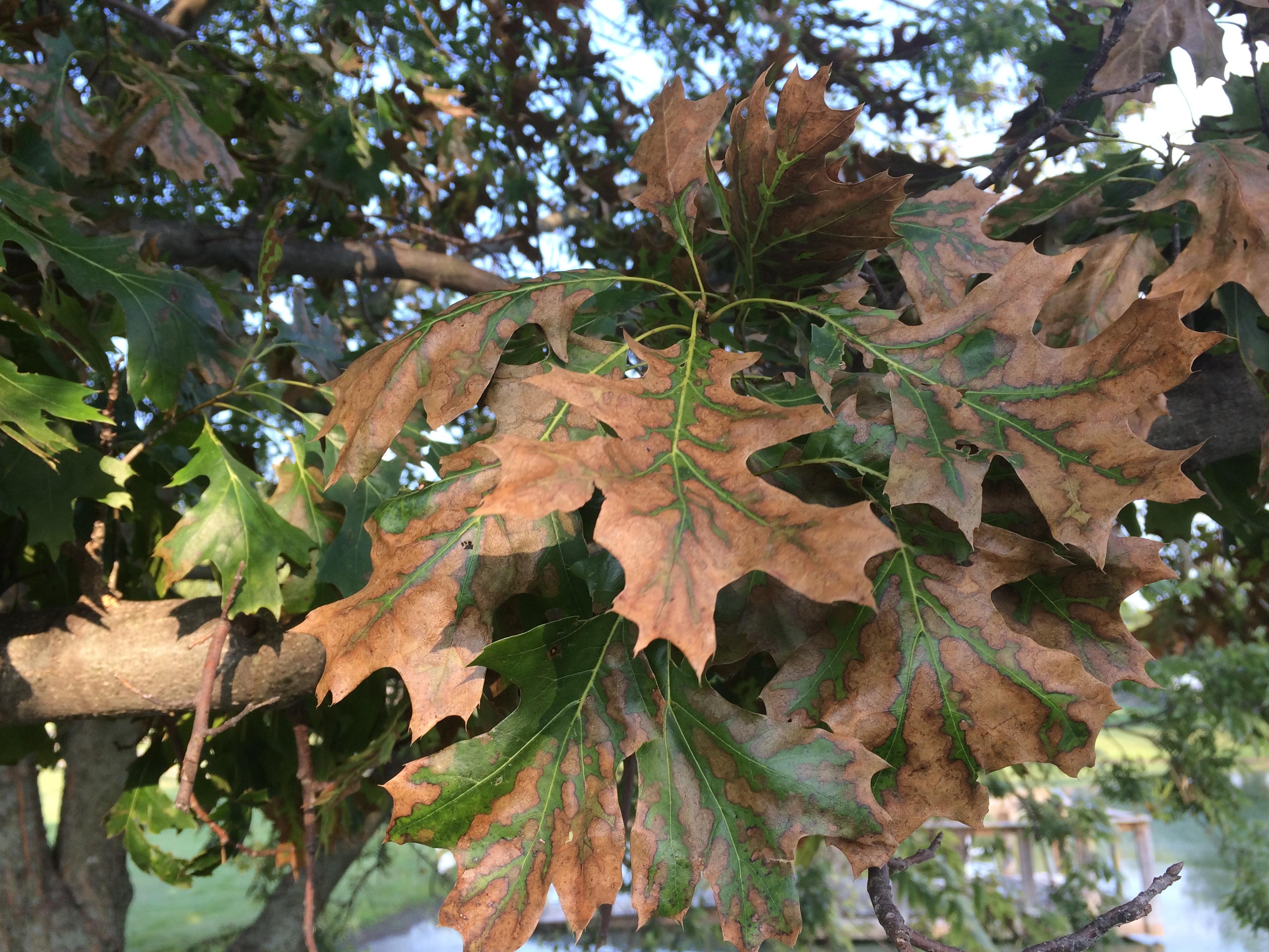 New Leaf Tree & Shrub Care image 6