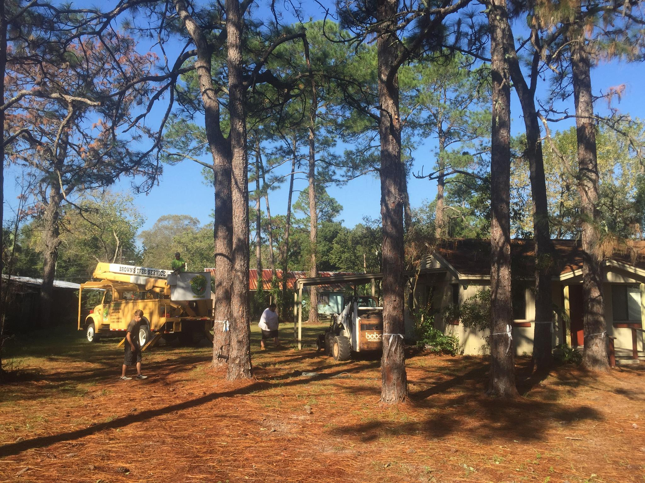 Brown's Tree Service and Land Clearing image 10