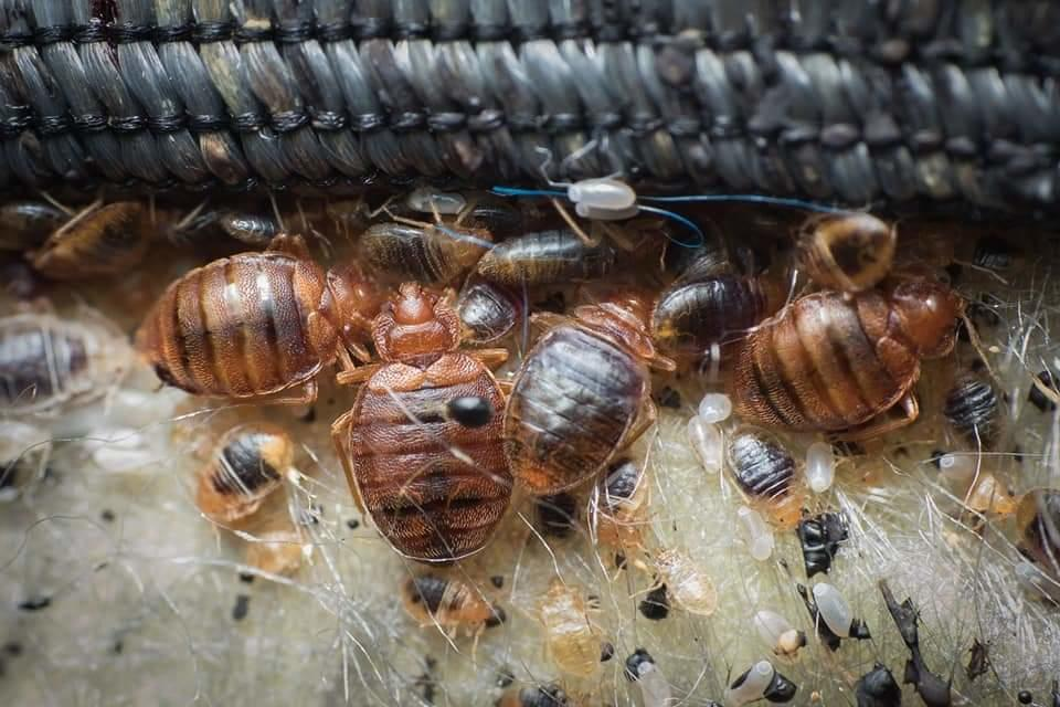 Truly Nolen Termites and Pest Control Lancaster image 4