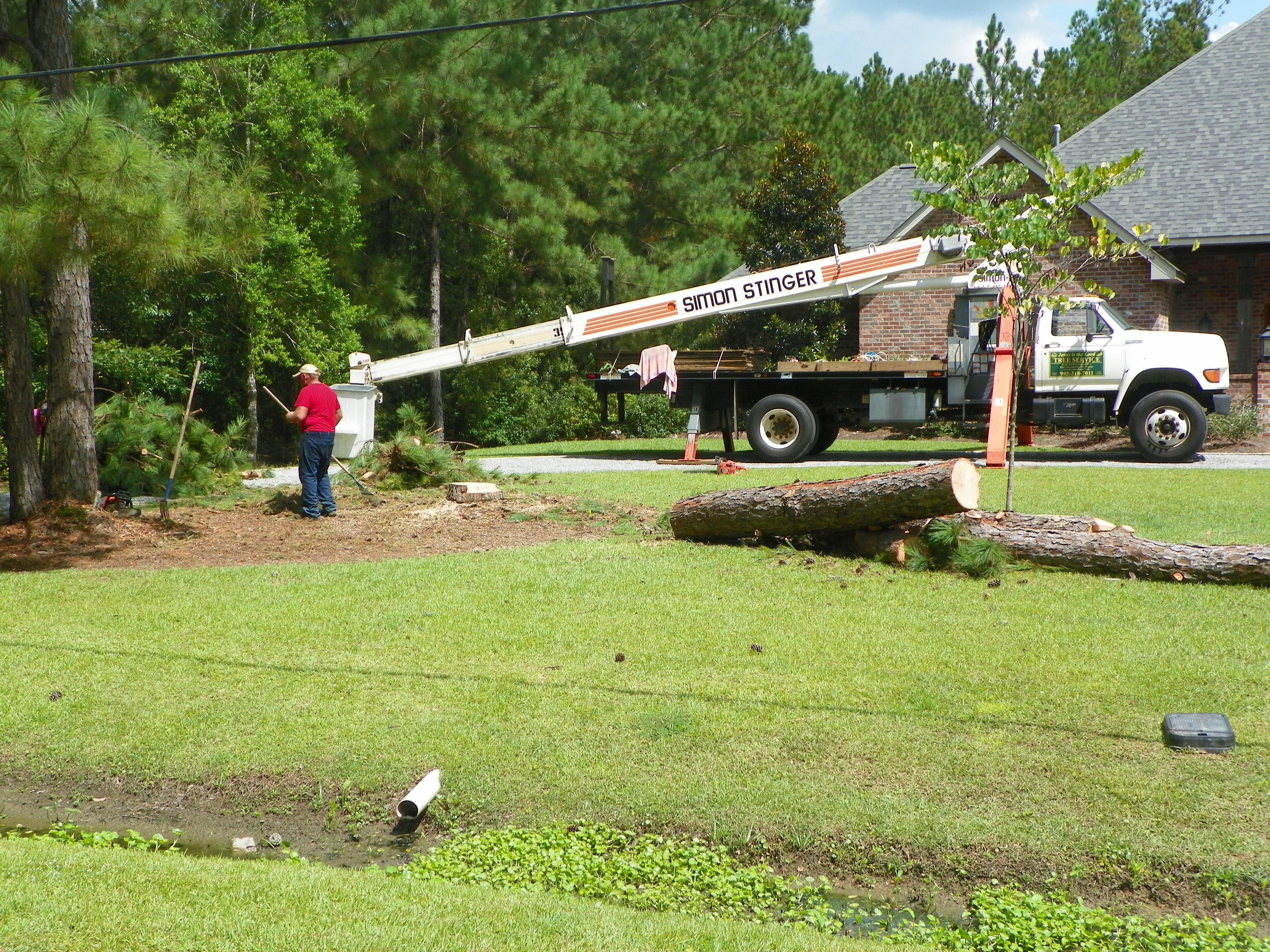 Barry McCraney Tree Service image 3