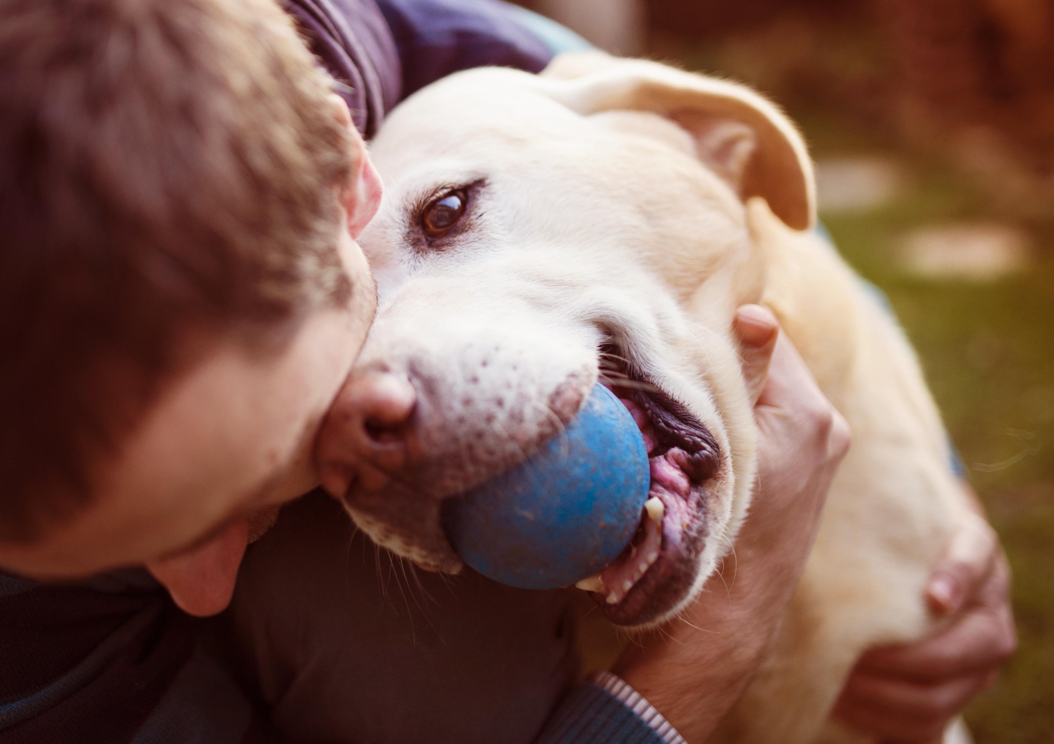 Fetch! Pet Care image 17