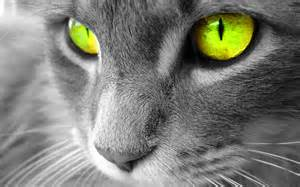 Neon Dream Pet Sitting image 5