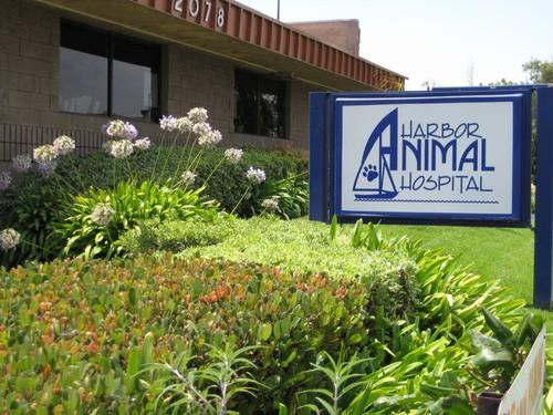 Harbor Animal Hospital image 0