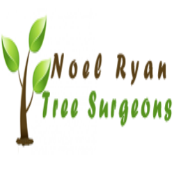 Noel Ryan Tree Surgeon