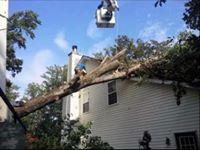 spears tree service image 8