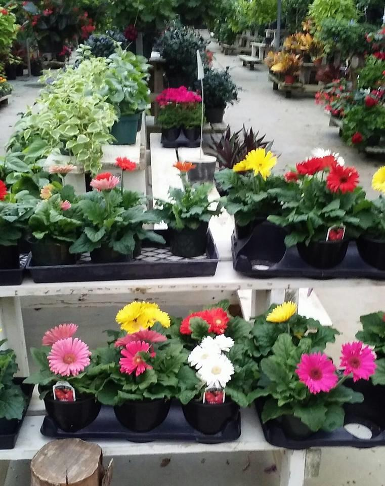 Country Greenhouses image 0